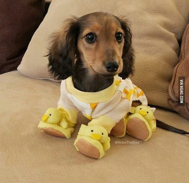 Dog In Duck Pajamas Baby Animals Cute Animals Pets