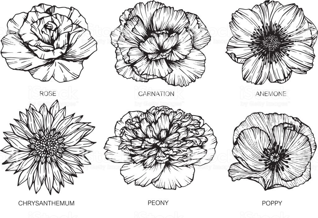 Collection Of Flowers Drawing And Sketch With Line Art On White Flower Tattoo Shoulder Flower Drawing Poppies Tattoo