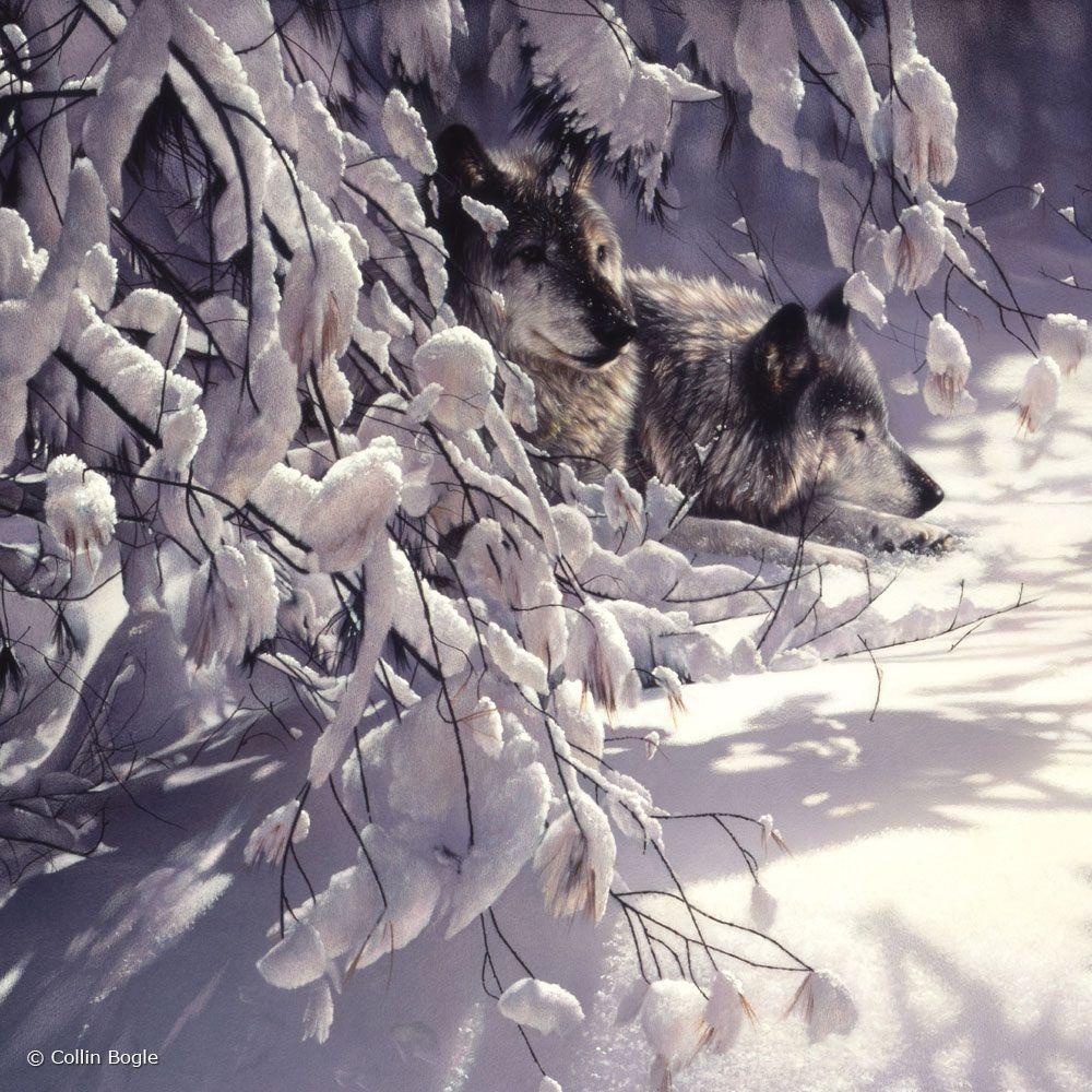 волки зима пейзаж картинки весной этого
