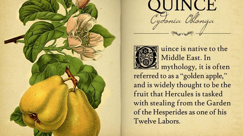 da7285f66b13791e22871d98e61e2c1f - Secrets Of The Dead Gardens Of Babylon