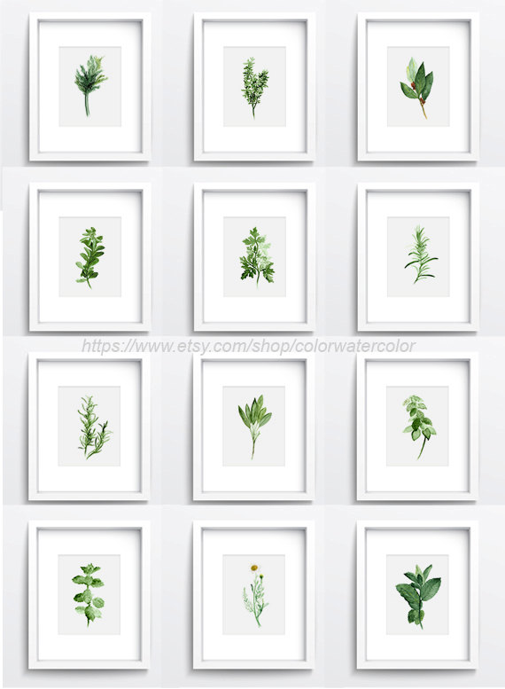 Herbs Chart Set Of 12 Spices Wall Decor Kitchen Art Print Giclee