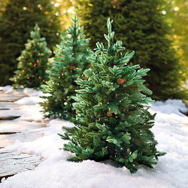 3 Ft Hyde Park Pathway Trees Set Of Two Christmas Lawn Decorations Outdoor Christmas Lights Outdoor Christmas