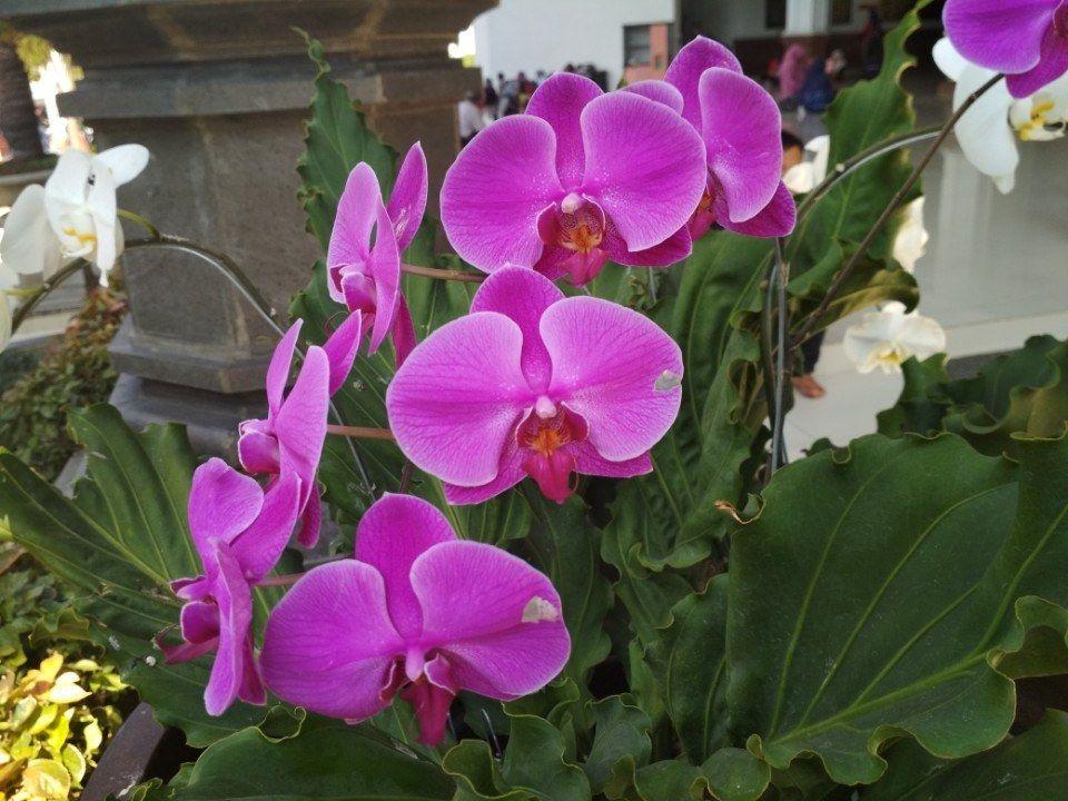 Gambar Bunga Anggrek Setangkai Trio Andesta Setangkai Bunga Putih Duration Foto Foto Bunga Anggrek Gambar Wallpaper Bunga Ini Anggrek Bunga Wallpaper Bunga
