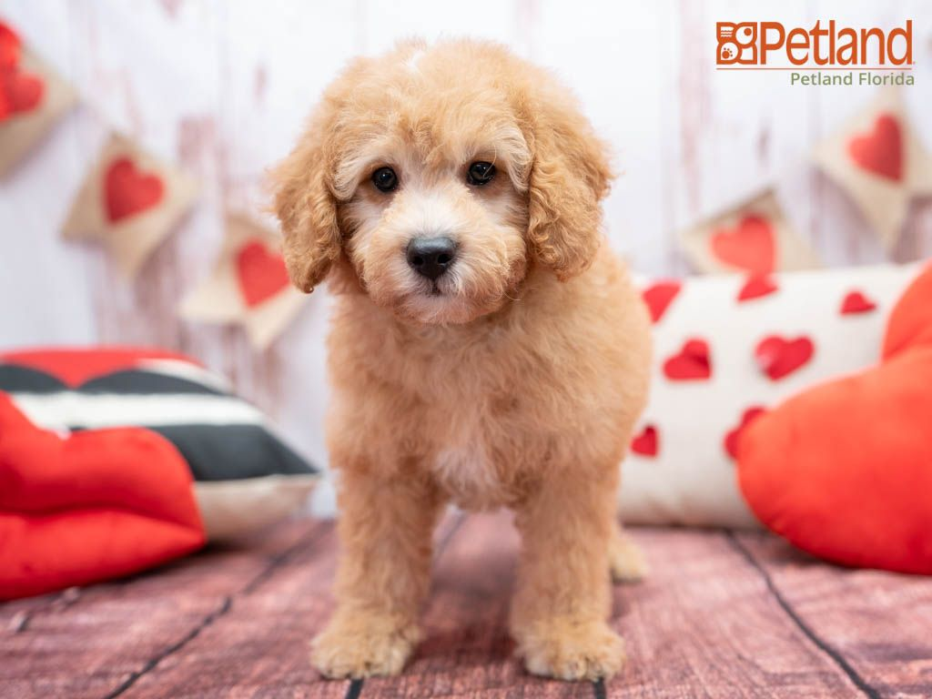 500 Off This Puppy In 2020 Puppy Friends Cute Dogs Puppies