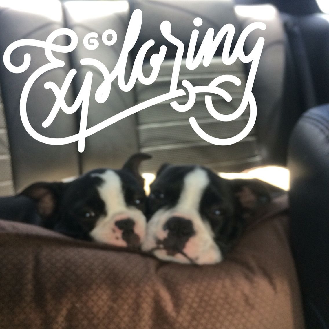 Don T Leave Your Pets At Home Go Exploring Together Travelingwithpets Pettravel Bostonterriers Pet Travel Boston Terrier Pets