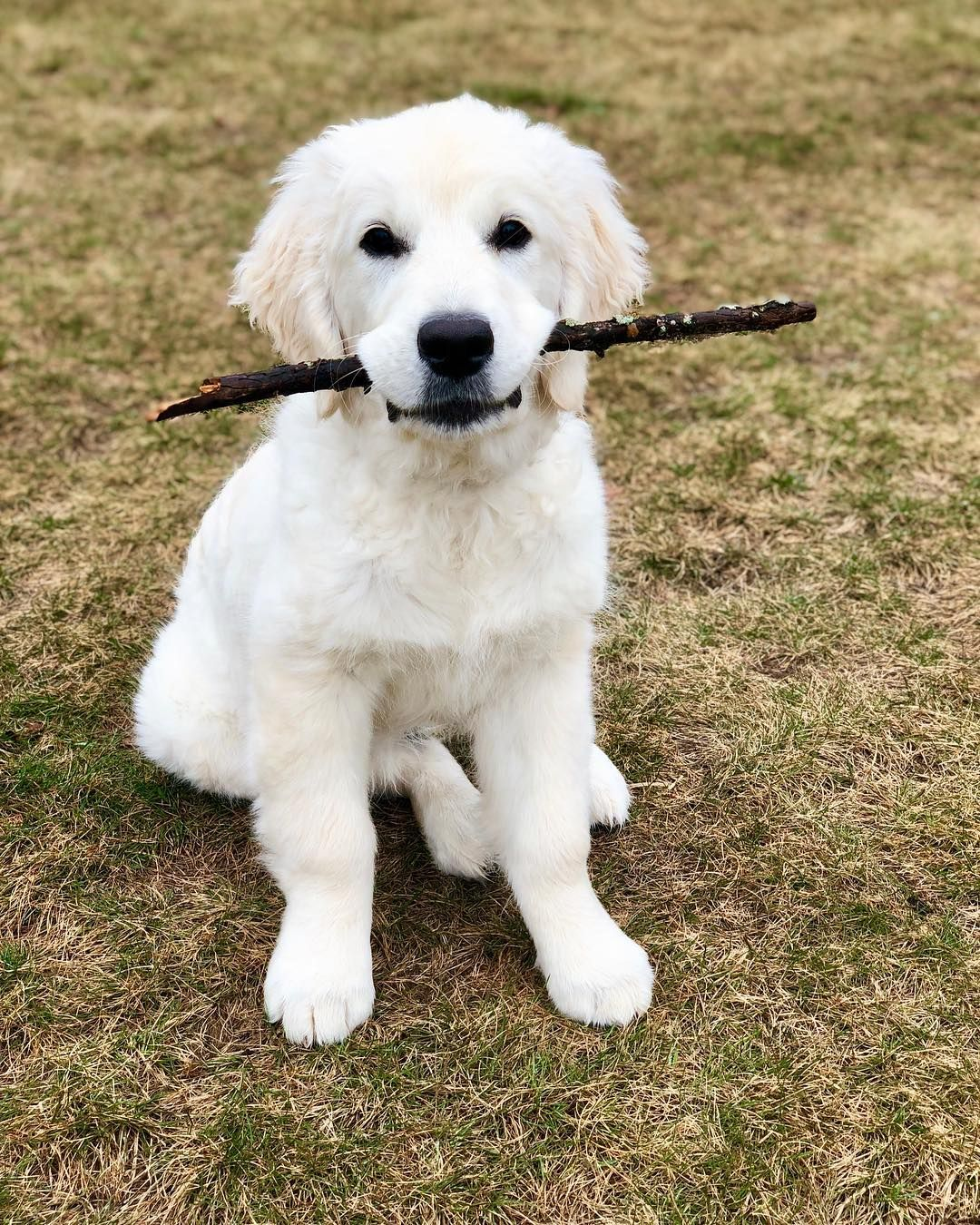Wesley On Instagram I Found Dis Stick It My Favorite