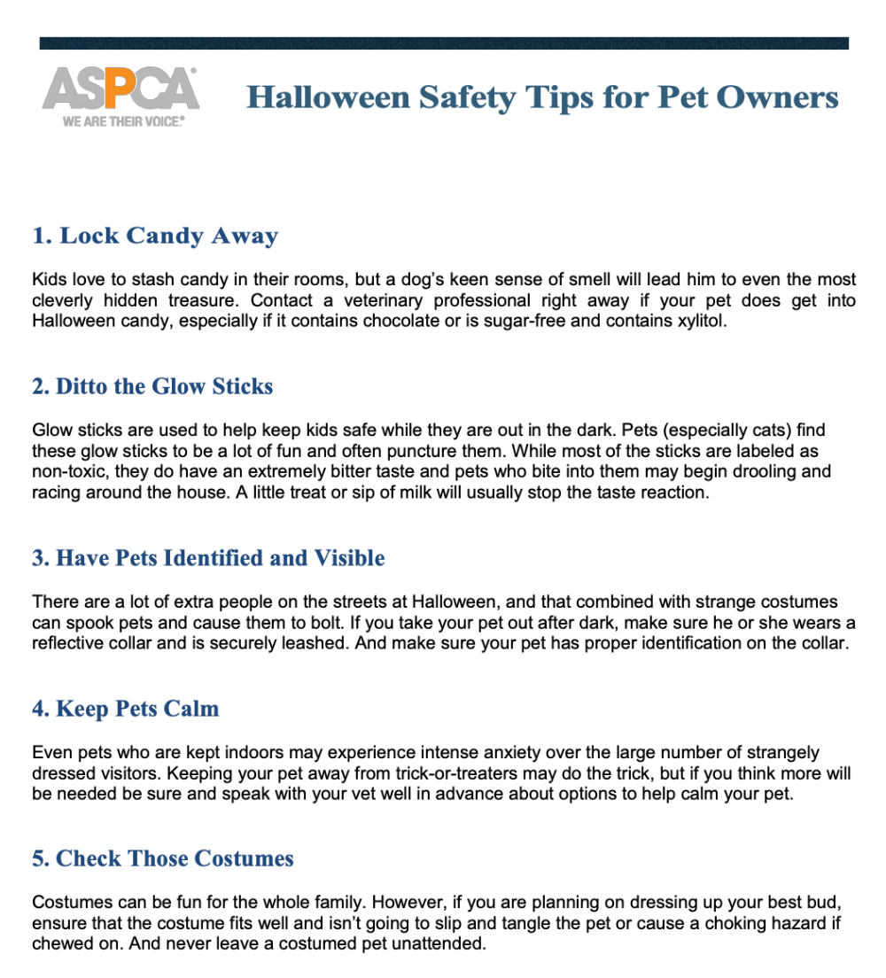 Top 5 Halloween Safety Tips For Vets And Pets Dr Justine Lee
