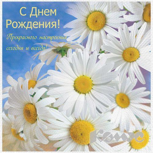 Картинки по запросу открытка с днем рождения ромашки
