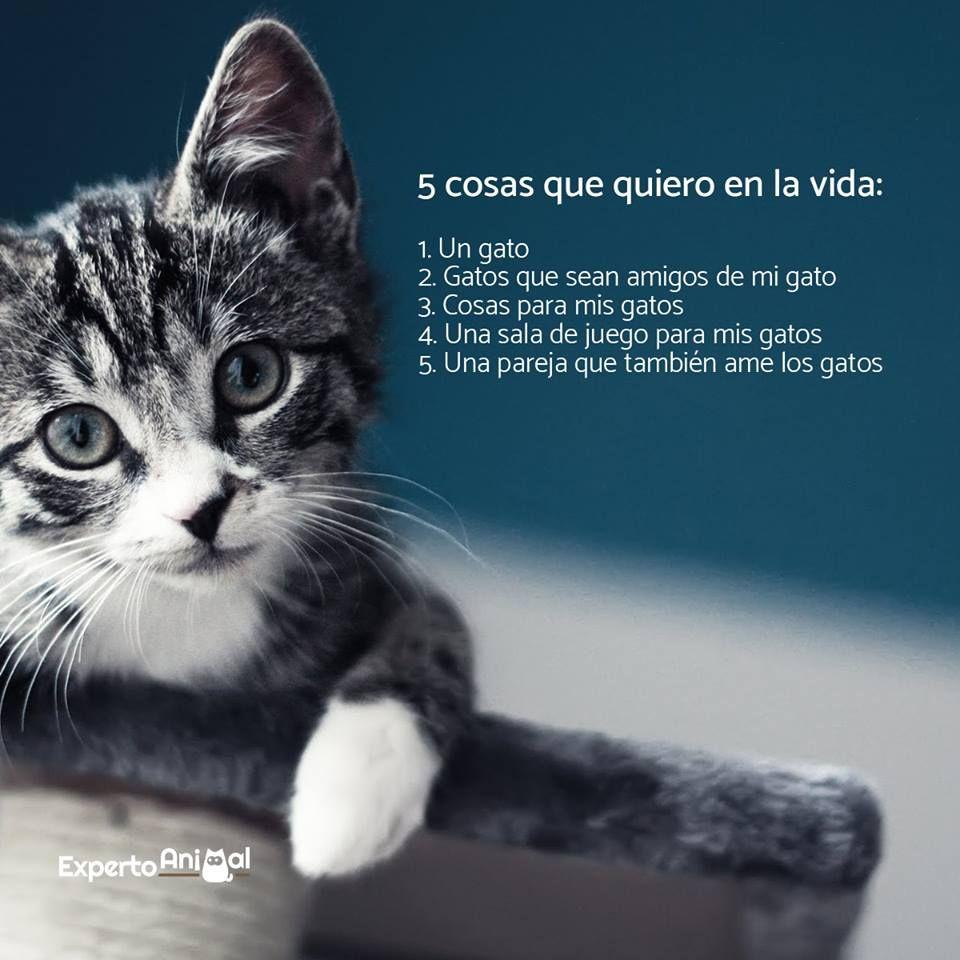 81e64805eb1 Ventajas de adoptar un gato adulto. Adoptar una mascota es una decisión que  no puede ser tomada a la ligera. Todos los miembros de la familia deben  estar de ...