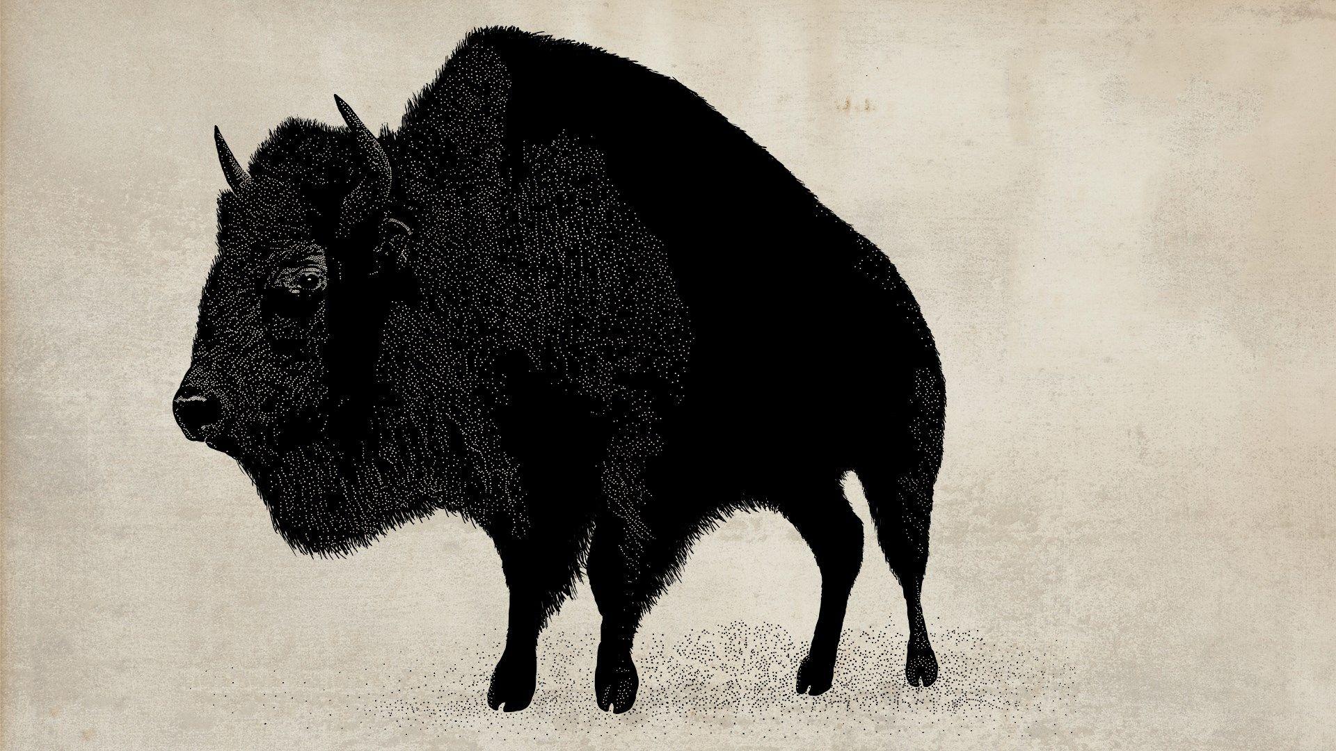 Cool Bison Wallpaper - da7508db1078d58151c49fb811ac9e20  Pictures_483750.jpg
