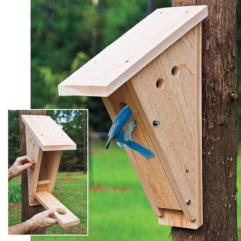Peterson Bluebird Nest Box Nesting boxes, Bird house