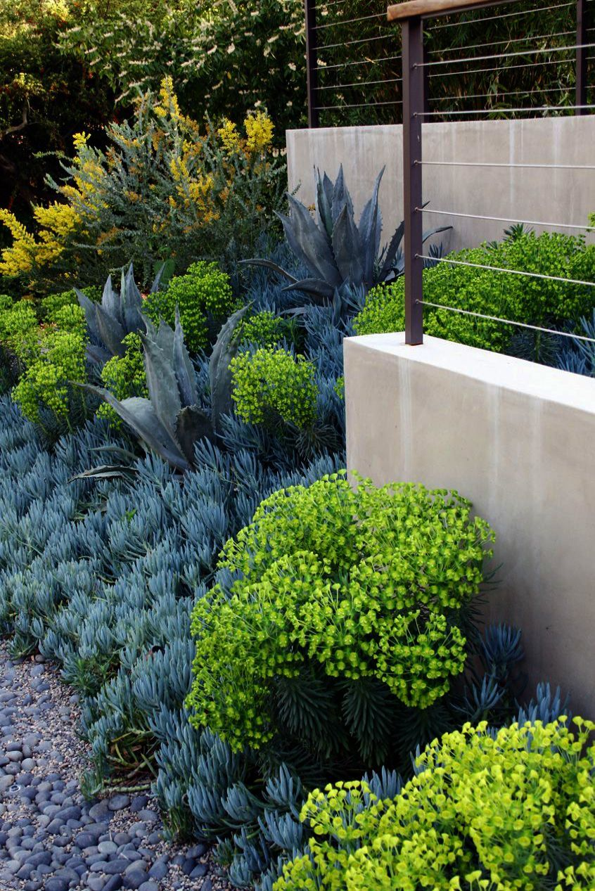 Quick And Easy Landscaping On A Budget Succulent Landscape