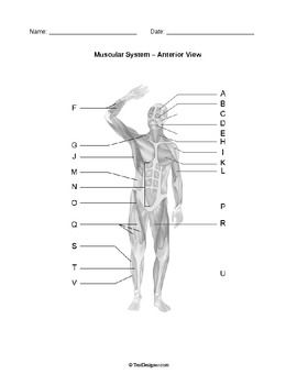 Human anatomy body systems diagrams pack body systems diagram this pack of reproducible worksheets features professionally created body system diagrams designed specifically for biology and anatomy physiology ccuart Images