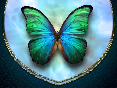 Image result for green butterfly
