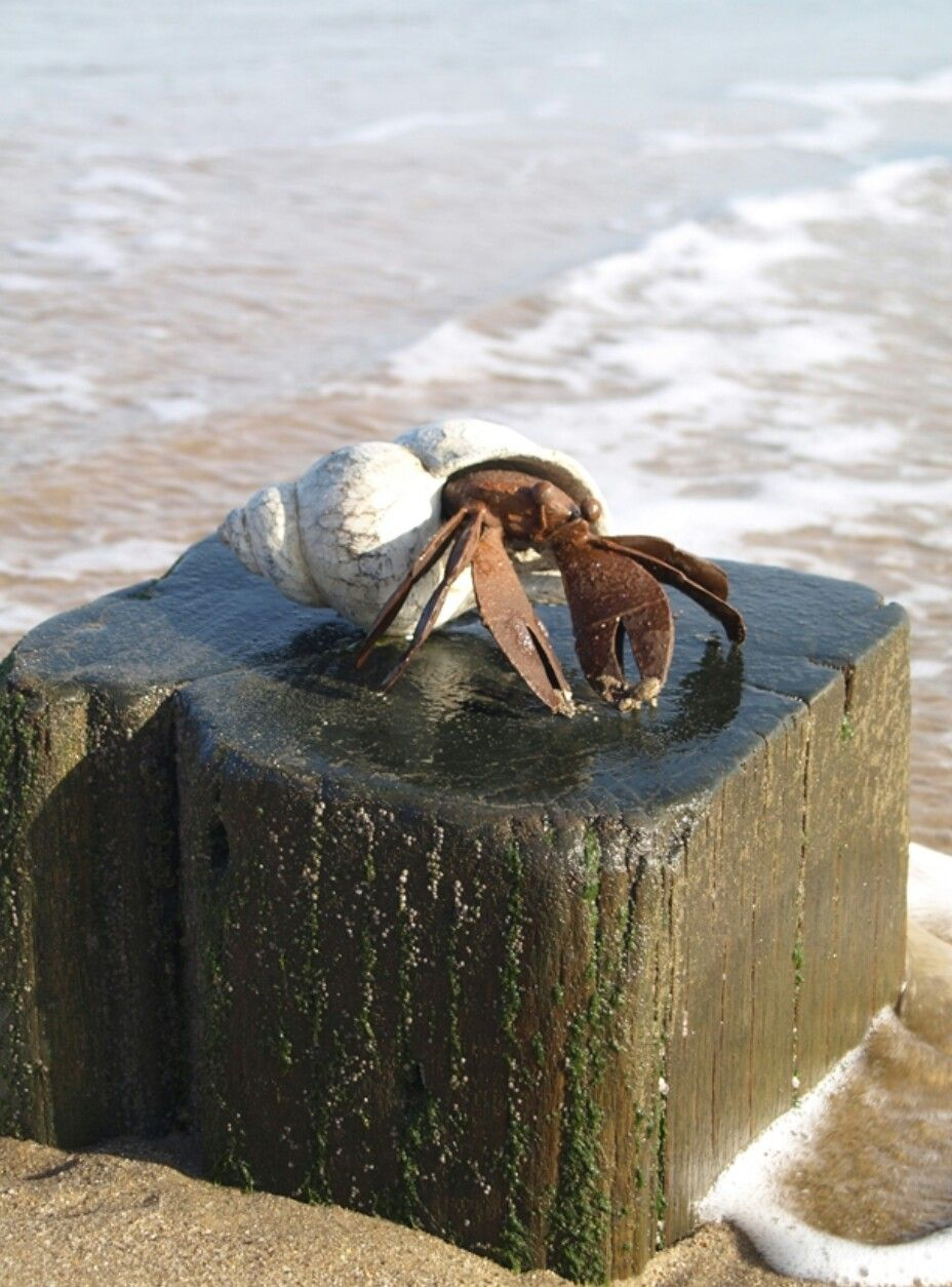 Nautical gifts for the home - Henry Hermit Crab Shoelessjoe
