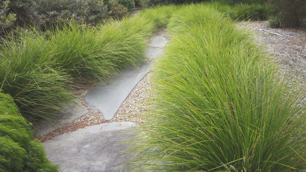 Top Grasses To Use In The Bay Area Gates And Associates In 2020 Grasses Landscaping Landscape Design Native Garden