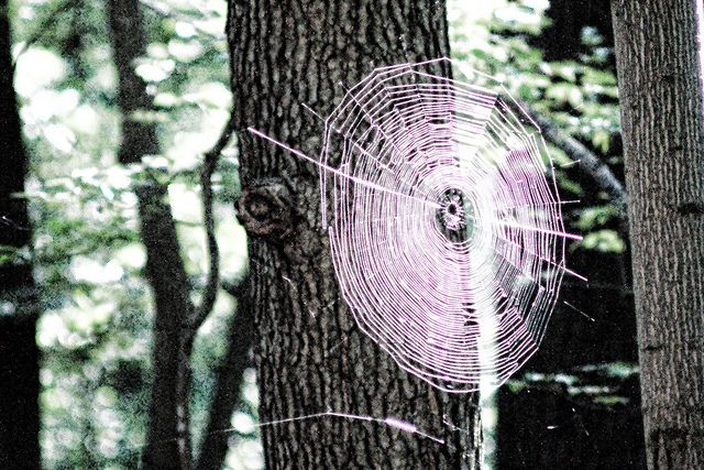 Spider Web by Eric E Haas, via Flickr