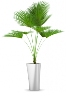 Animals For Outdoor Potted Plants Png Potted Plants Outdoor Plants Potted Plants