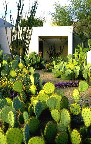 Pin by chris hoffman on Floyd\'s Random Thoughts | Pinterest | Cacti ...