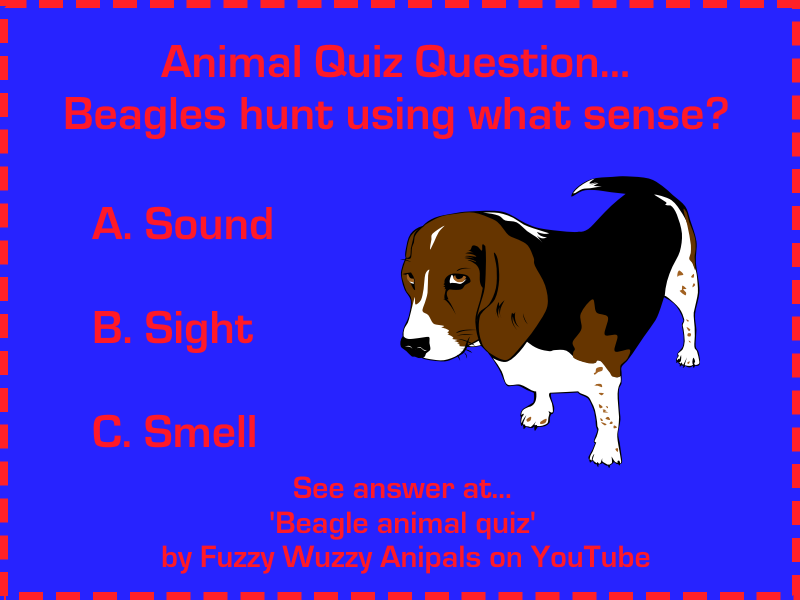 Fun animal quiz for kids about the beagle...What sense do