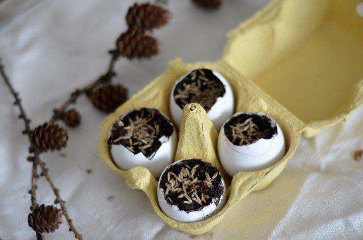 Rairuoho munankuoressa / Kaikki on hetken tässä http://www.stoori.fi/kaikkionhetkentassa/rairuoho-munankuoressa/