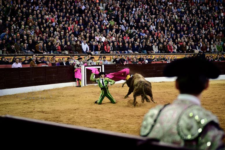 Daniel Ochoa de Olza, Bullfighter's Comeback