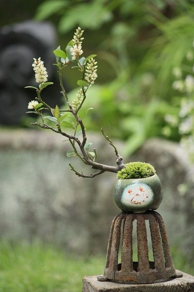 A Liberal Bonsai...leaning left....or from the other side, a Conservative Bonsai, leaning right.