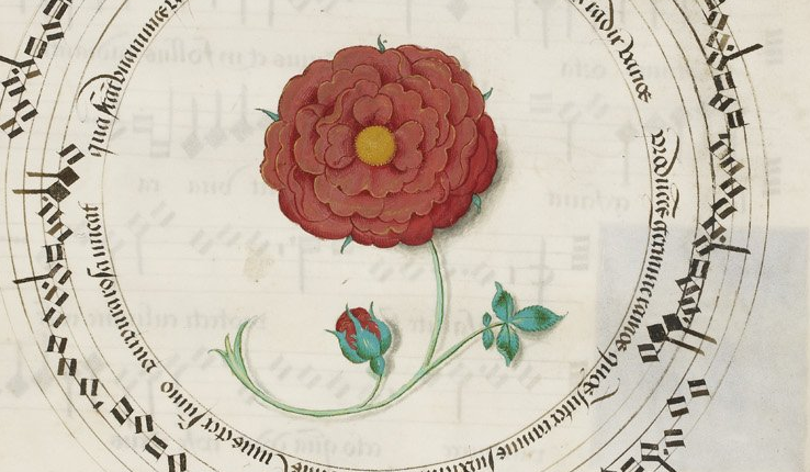 Roses reached the height of European favor in the 1200s and the 1300s after several centuries of increasing popularity.