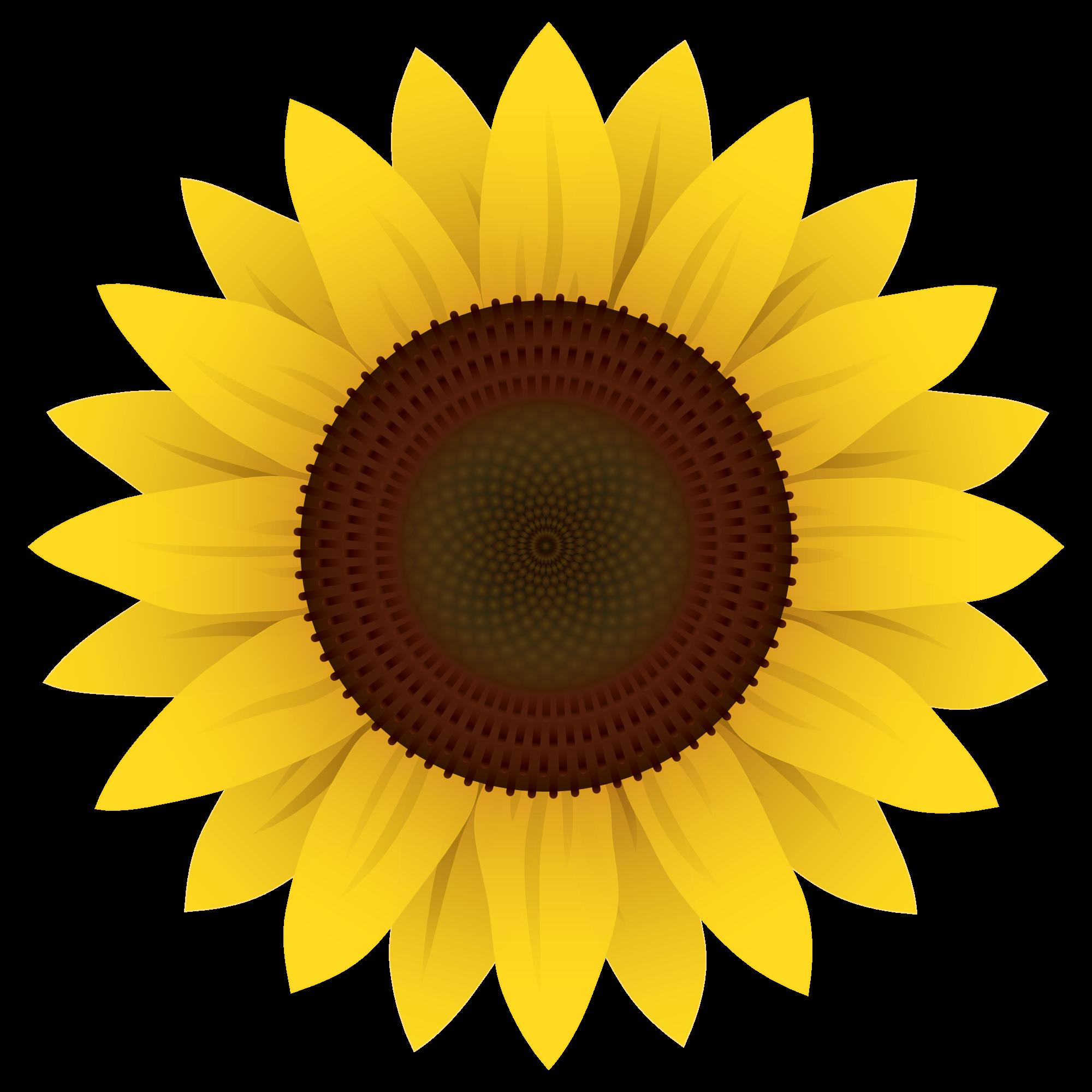 Sunflower Icon Cartoon Sunflower Png Sunflower Drawing Sunflower Images Sunflower Clipart