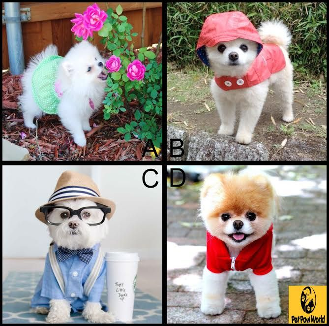 Who wore the best outfit? Who looks more stylish? A, B, C or D. Leave your comments here.