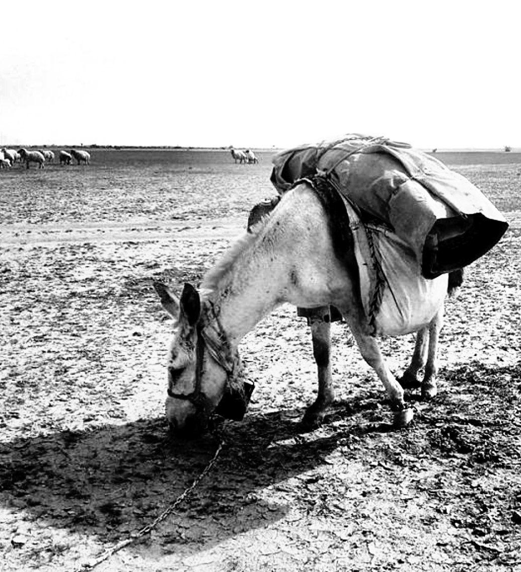 محمدبم العز Horses Animals