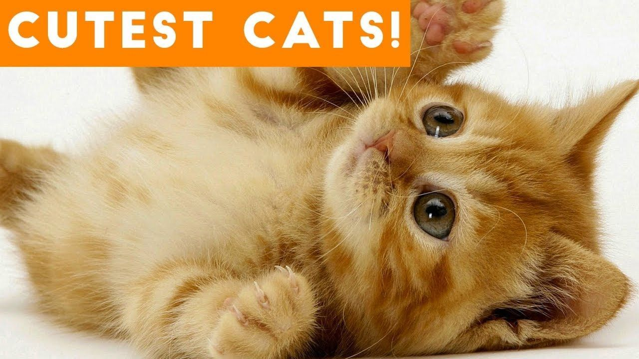 This is awesome Ultimate Cute and Funny Cat Compilation 2018 | Funny Pet Videos  #cat #catprankvideos #catpranks #catreaction #cattalking #cattalkingvideo #catvideos #crazycat #crazycats #cutecat #funnycat #funnycatcompilation #funnycatvideos #jumpcat #whycat #whycats #whycatsarebetterthandogs #whycatsarethebest #whycatsbite #whycatsmeow #whycatspurr
