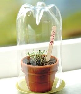 DIY Mini Green House – use a trimmed, clean upturned drink bottle to create humidity while raising seeds. Easy to grow micro greens or herbs on a sunny windowsill this way   keep plastic out of landfill. Trim sprouted seedlings with scissors #PlasticsInTheGarden