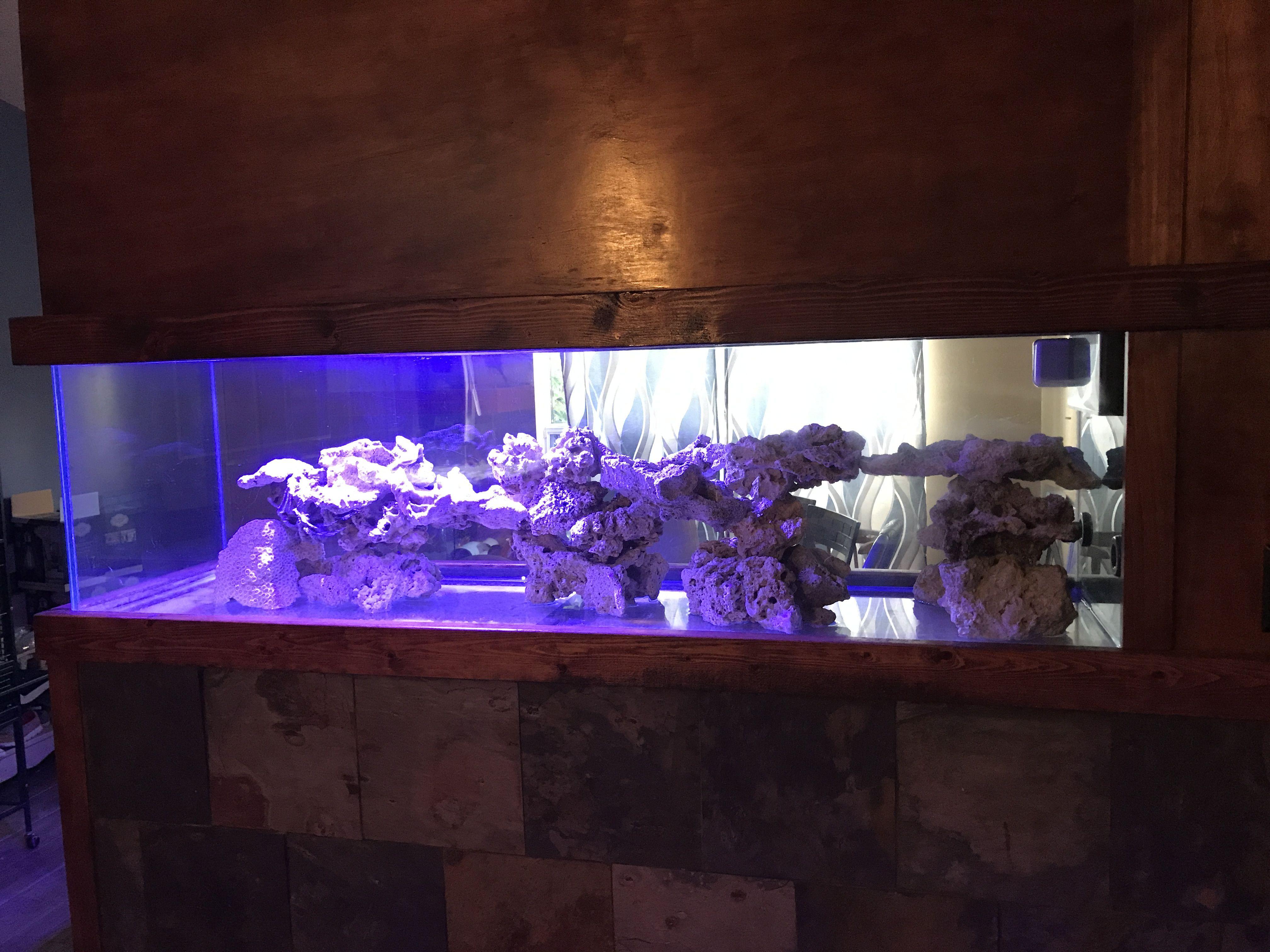 Pin by Cameron Zimmermann on Aquarium Fish tank