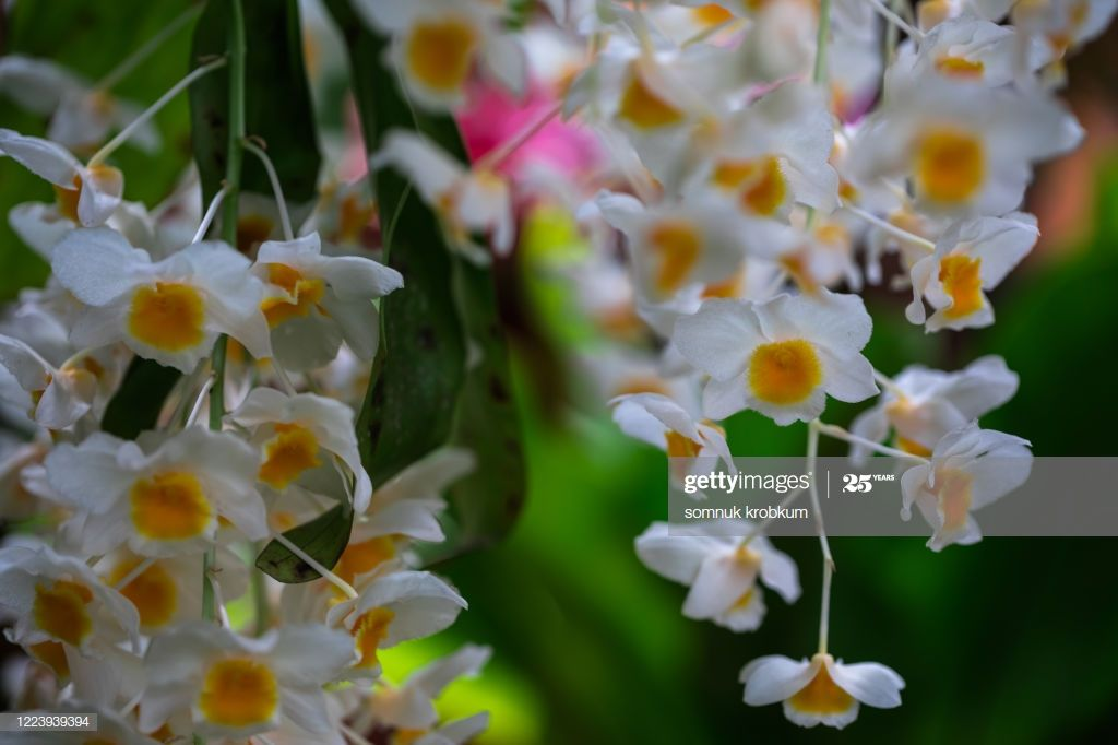 Orchid In Macrophotography Photography #Ad, , #Affiliate, #Orchid, #Macrophotography, #Photography