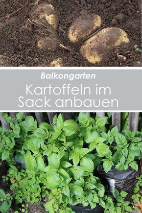 Kartoffeln Im Sack Anbauen Auf Dem Balkon Mit Bildern Pflanzen Garten Hochbeet Balkongarten