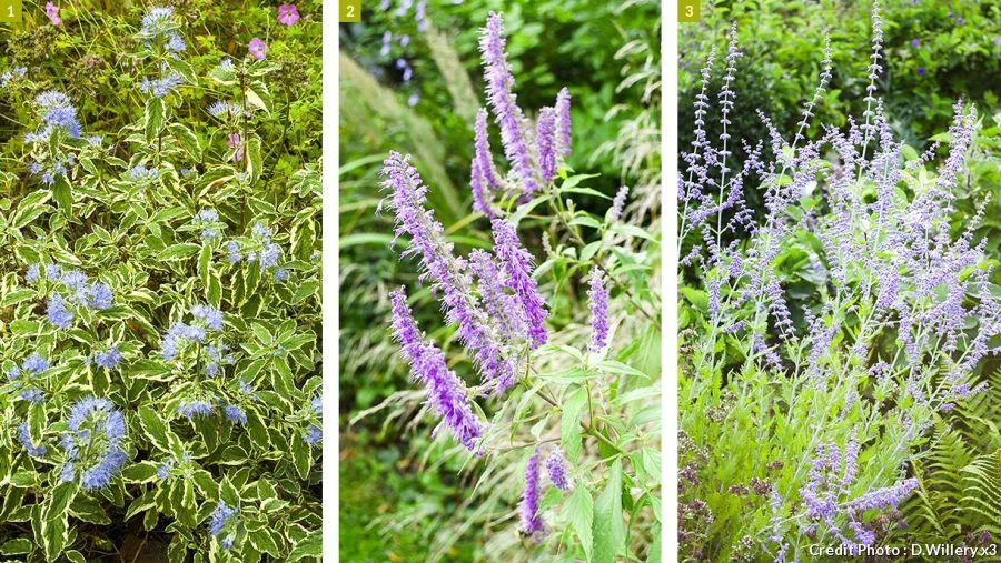 9 plantes pour une haie fleurie toute l 39 ann e jardinage pinterest garden plants and nature. Black Bedroom Furniture Sets. Home Design Ideas