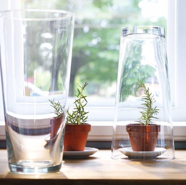 Turn A Bladet Vase Over For An Instant Individual Plant Sized