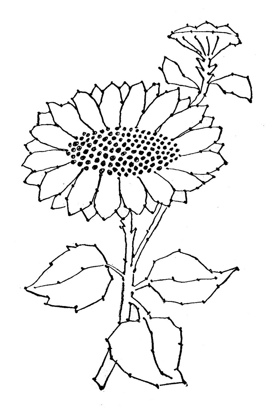 embroidery pattern sunflower line art graphics fairy