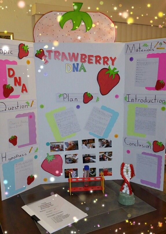 Science Project, extracting DNA from a strawberry 4th grade - science project report