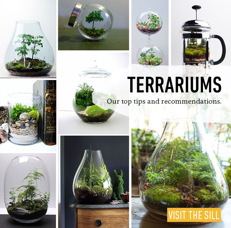 how to terrariums petits jardins pinterest jardins terrarium et jardinage. Black Bedroom Furniture Sets. Home Design Ideas