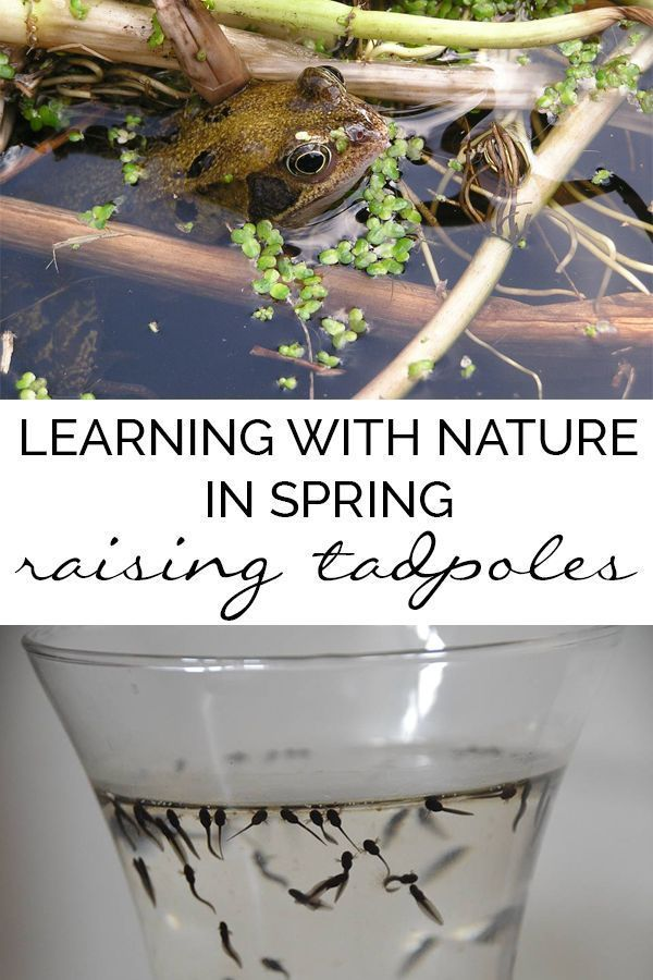 How to Raise Tadpoles