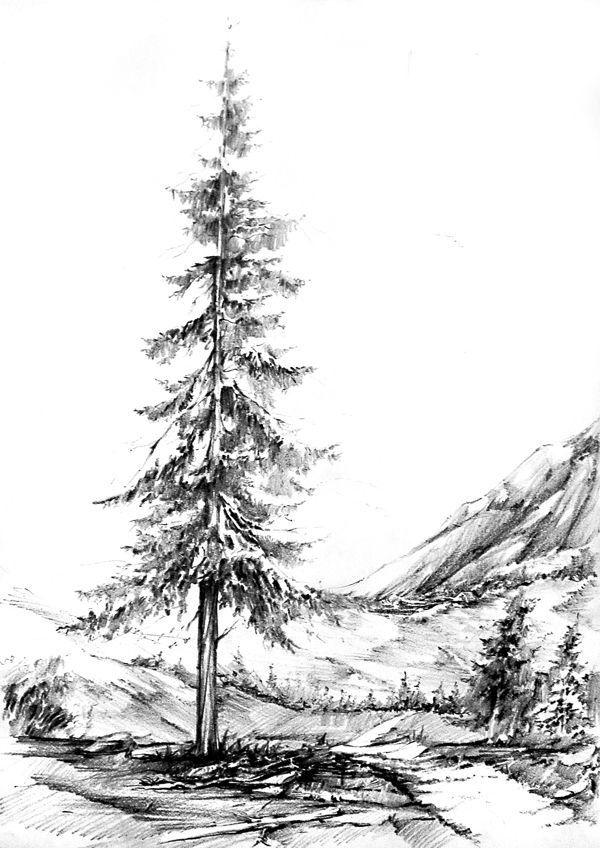 trees mountain scenery greyscale