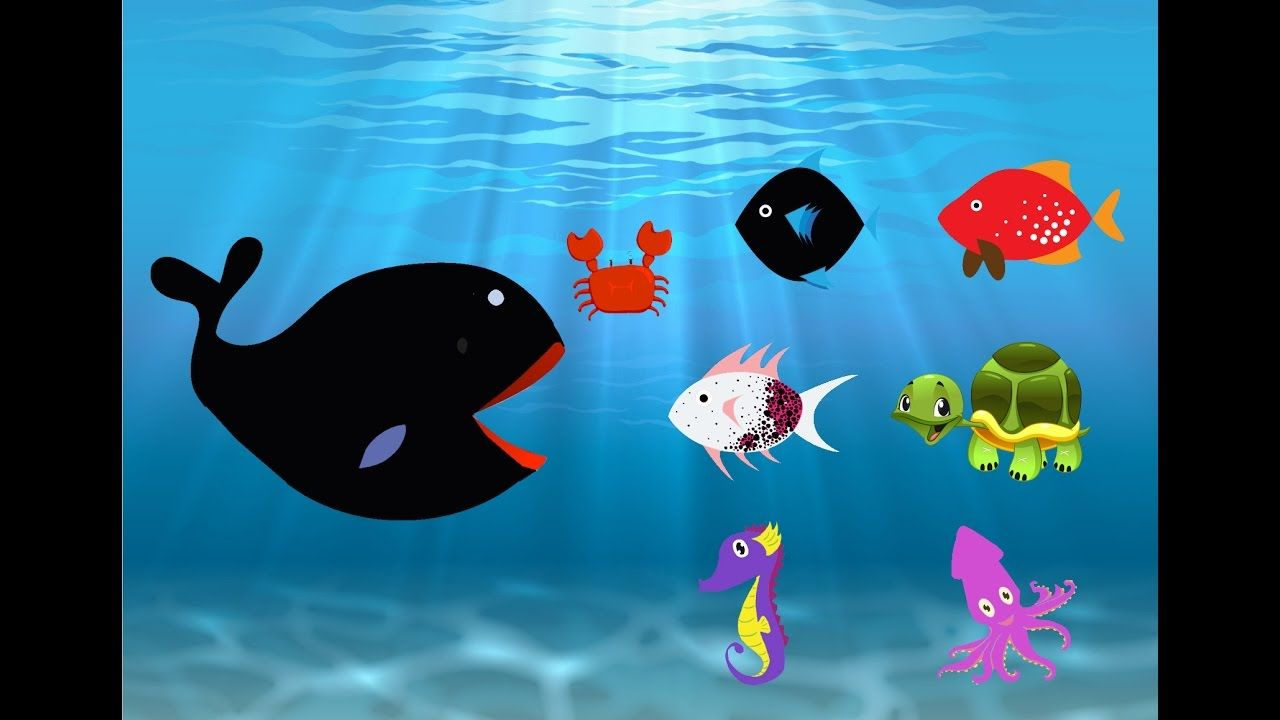 Learn Colors With Sea Fish animals For Children   Learn Color For Kids P...