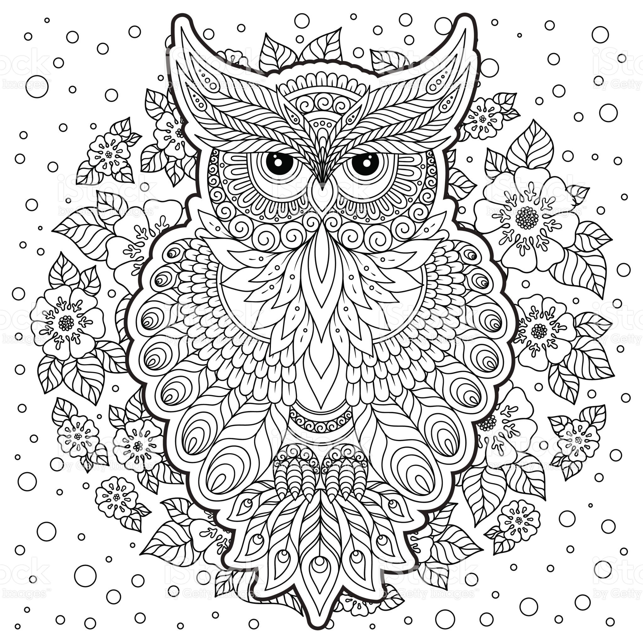 coloring page with owl and floral frame vector
