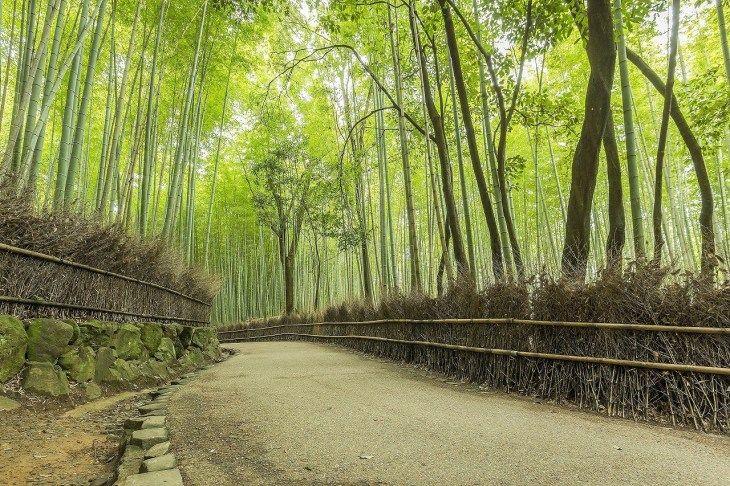 (16)「嵐山」を巡る日帰りプラン-その1