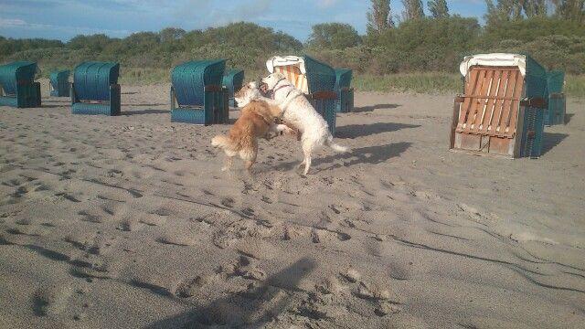 Insel Poel, unsren Hunden gefällts