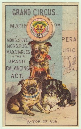 Chadwick S Sewing Thread Victorian Trade Card Circus Dog Dogs Pug Terrier Ny Sewing Art Vintage Posters Vintage Illustration