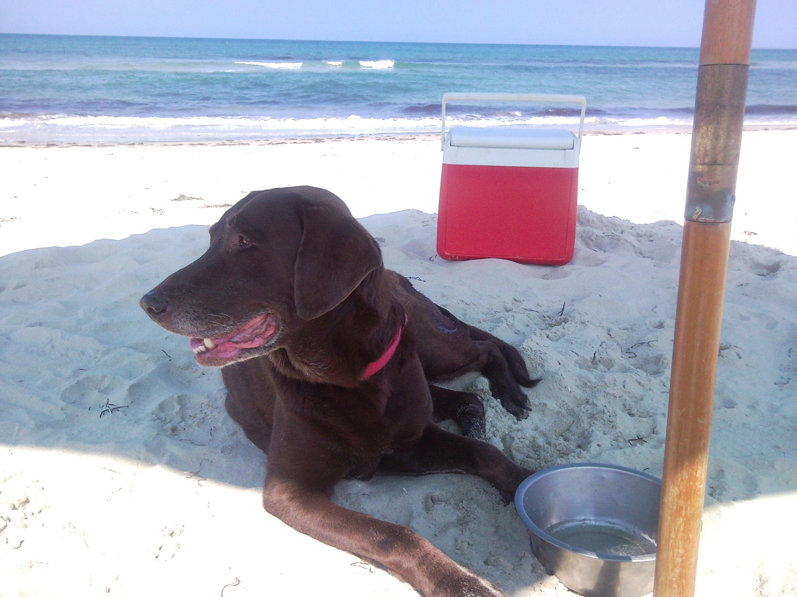 Pensacola Florida Has Pet Friendly Beaches