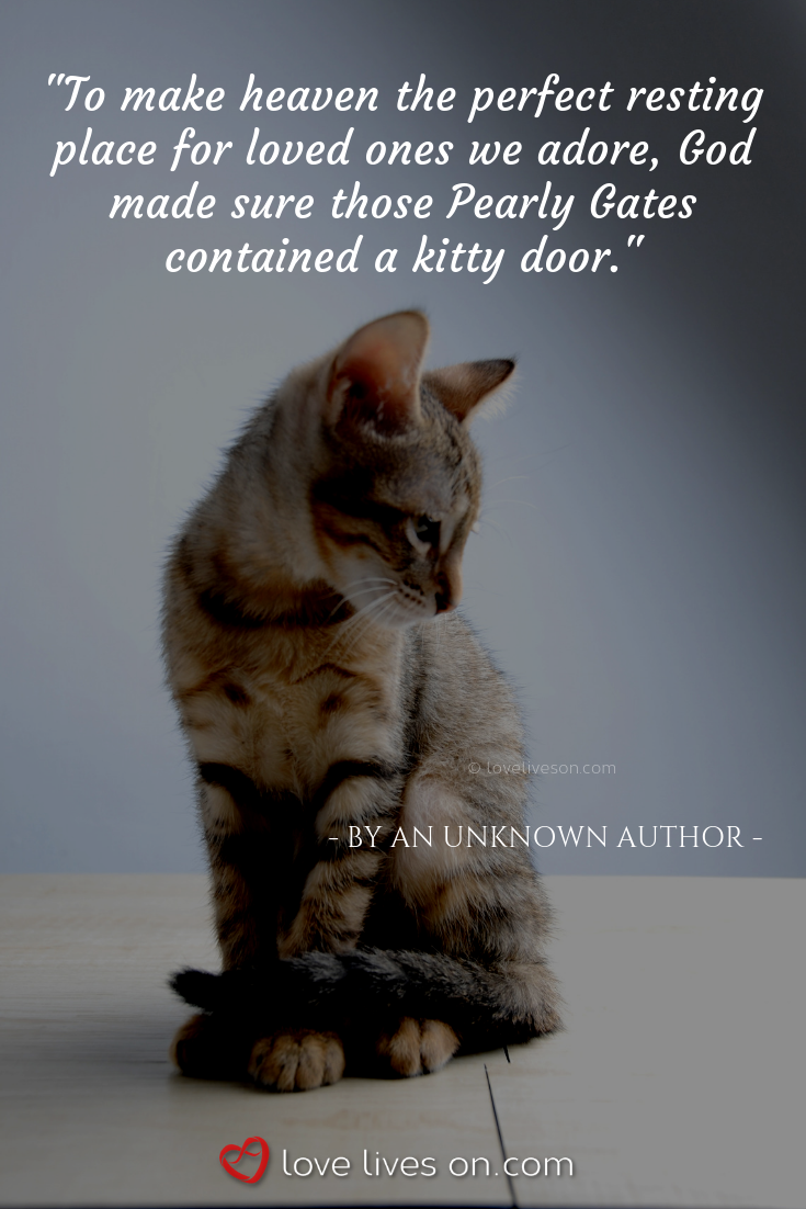 50+ Beautiful Loss of Pet Quotes | Pet quotes cat, Losing a ...